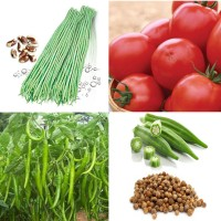 Vegetable Hybrid Seeds Combo Pack AG130