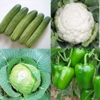 Vegetable Hybrid Seeds Combo Pack AG132
