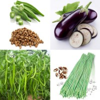 Vegetable Hybrid Seeds Combo Pack AG133